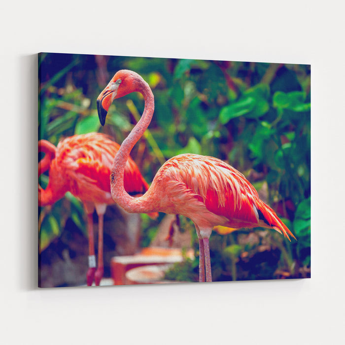Pink Flamingo Closeup In Singapore Zoo Canvas Wall Art Print