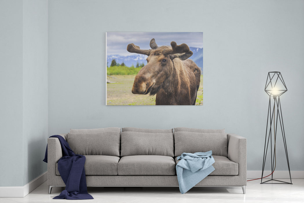 Moose In Alaska USA Canvas Wall Art Print