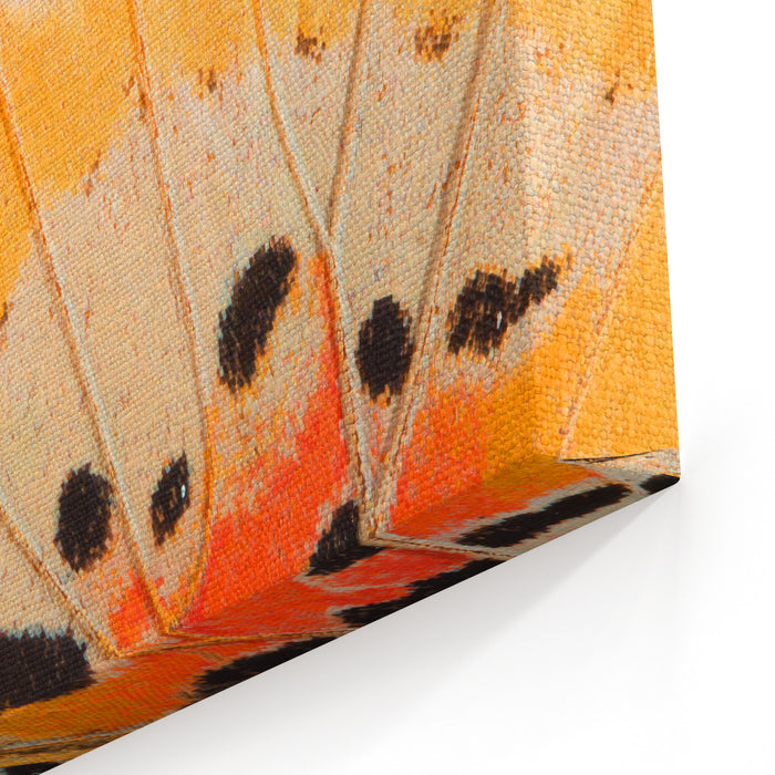 Butterfly Wing Texture, Close Up Of Detail Of Butterfly Wing For Background Canvas Wall Art Print