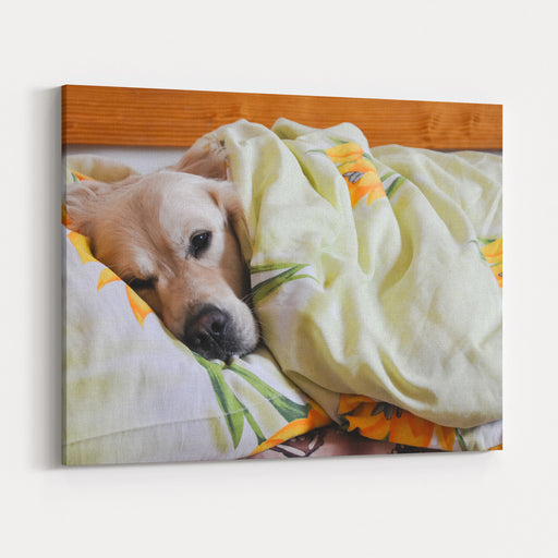 Dog Sleeps Under The Blanket Canvas Wall Art Print