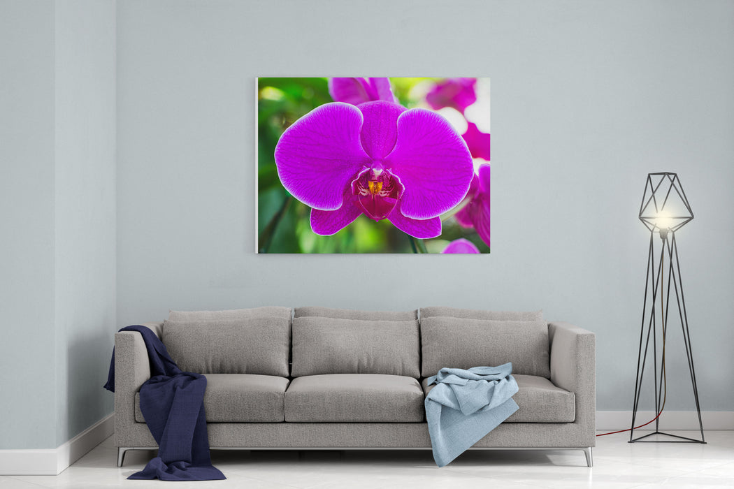 Beautiful Purple Orchid Flowers Canvas Wall Art Print