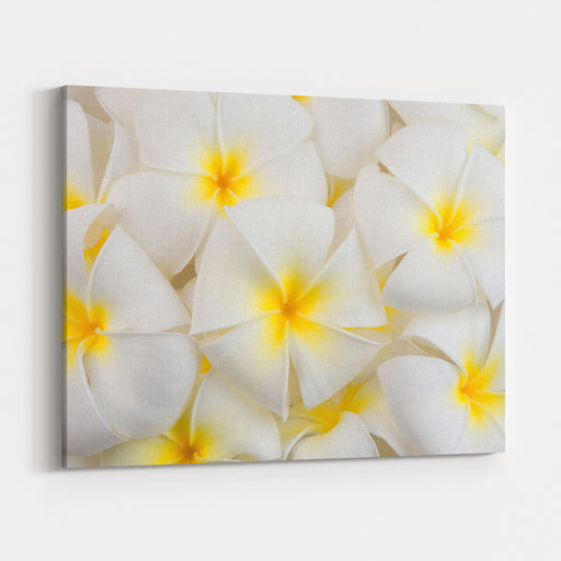 Frangipani Spa Flowers Background Canvas Wall Art Print