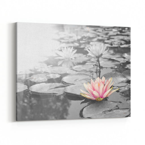 Sunlight Radiated Into Lotus,Pink Lotus Flowers  Nymphaea,Waterlily  In The Garden, Black And White Style Canvas Wall Art Print