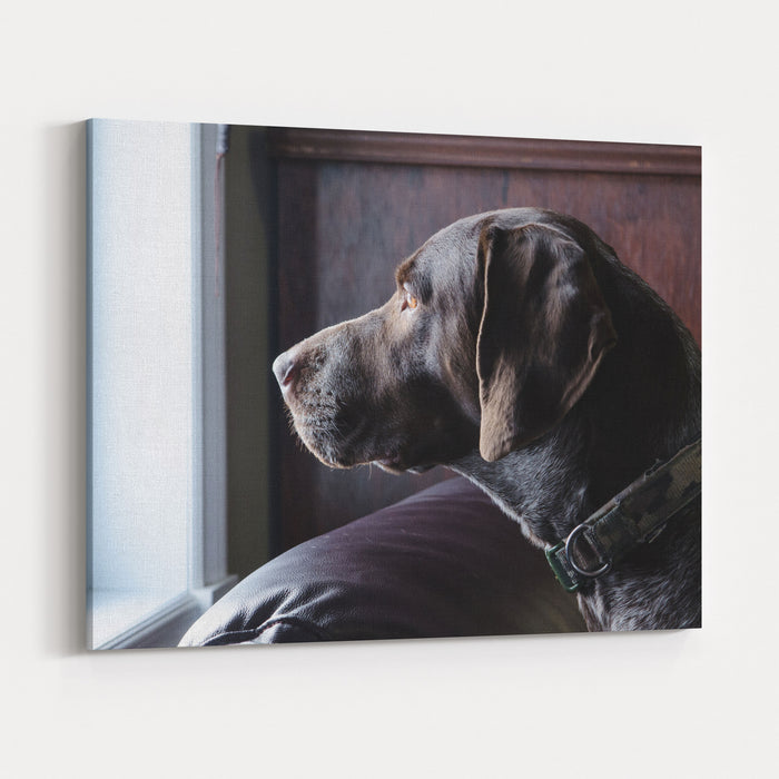 A German Short Haired Pointer Hunting Dog Looking Outside Through  A Window In Rich Brown Tones Canvas Wall Art Print
