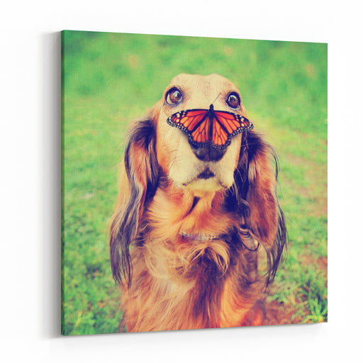 A Cute Dachshund At A Local Public Park With A Butterfly On His Or Her Nose Toned With A Retro Vintage Instagram Filter Effect App Or Action Canvas Wall Art Print
