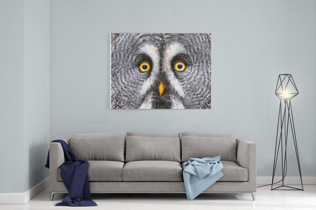 Amazed Great Grey Owl Hdr Canvas Wall Art Print