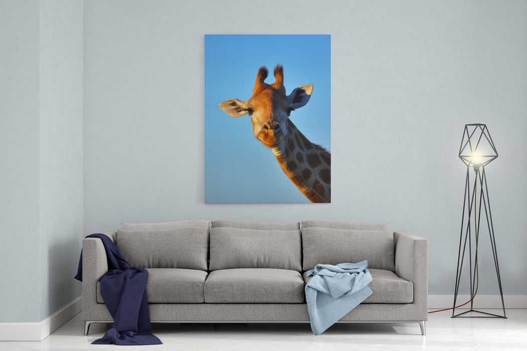Closeup Portrait Of A Giraffe  Giraffa Camelopardalis Canvas Wall Art Print