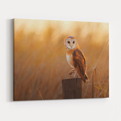 A Beautiful Barn Owl Perched On A Tree Stump Canvas Wall Art Print