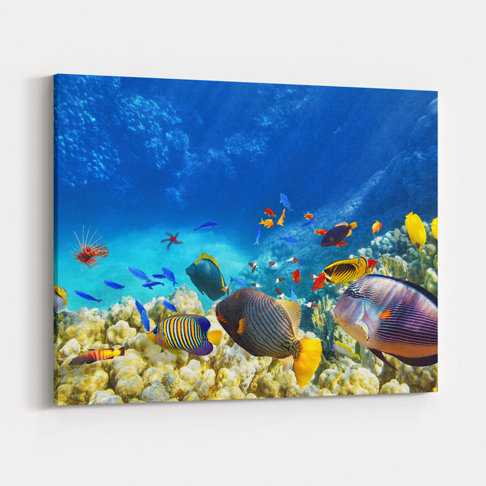 Wonderful And Beautiful Underwater World With Corals And Tropical ...