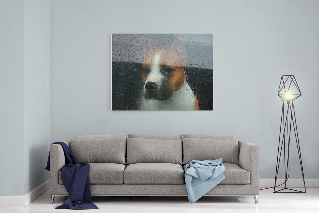Faithful Dog Sitting In A Car And Looking Through The Glass Canvas Wall Art Print