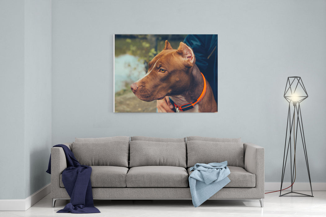 Cute Beautiful Dog Pit Bull Canvas Wall Art Print
