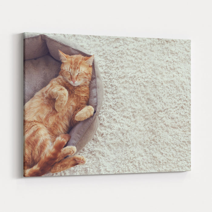 A Ginger Cat Sleeps In His Soft Cozy Bed On A Floor Carpet Canvas Wall Art Print
