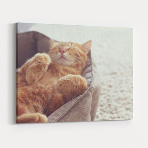 A Ginger Cat Sleeps In His Soft Cozy Bed On A Floor Carpet, Soft Focus Canvas Wall Art Print
