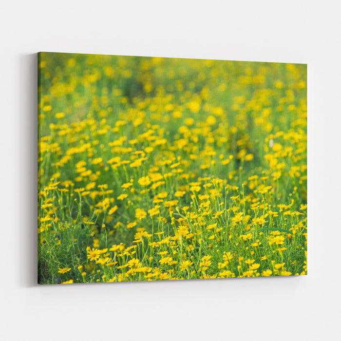 Blur Of Yellow Flowers Canvas Wall Art Print