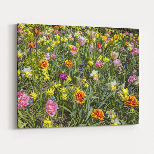 A Variety Of Different Colorful Flowers In The Field Canvas Wall Art Print