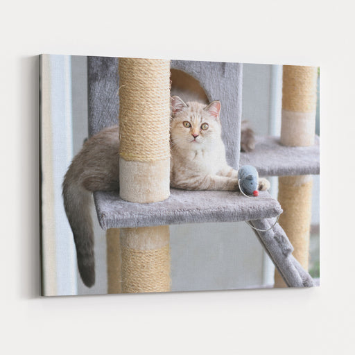 A Cat Is Playing With Toy On Cat House Canvas Wall Art Print