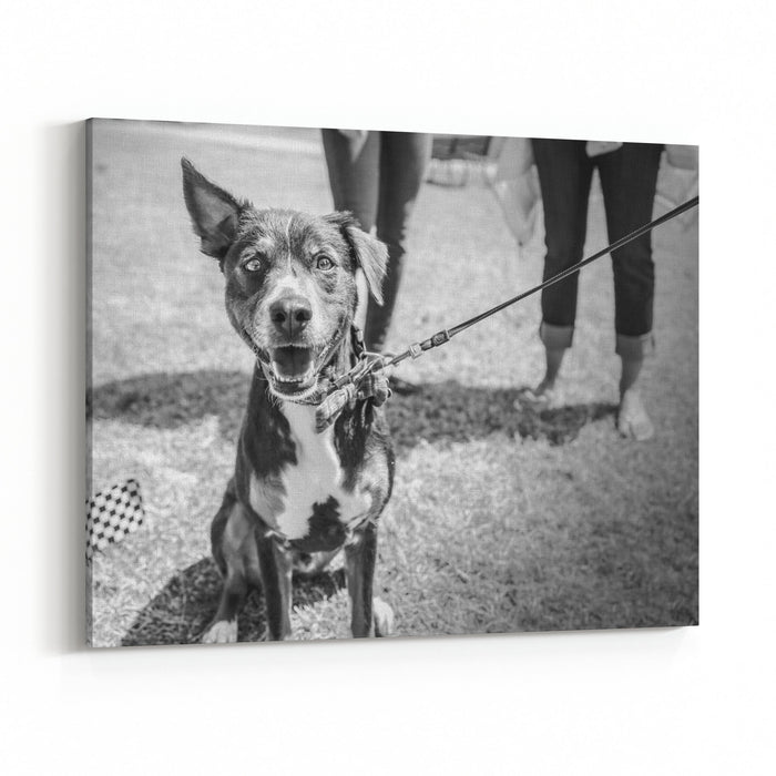 A Dog In Black And White At A Park With Its Owners Canvas Wall Art Print