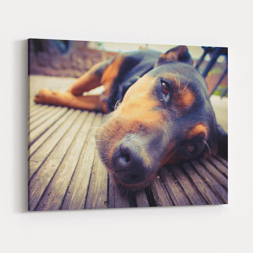 A Mixed Breed Dog Dozing On Wooden Deck Canvas Wall Art Print