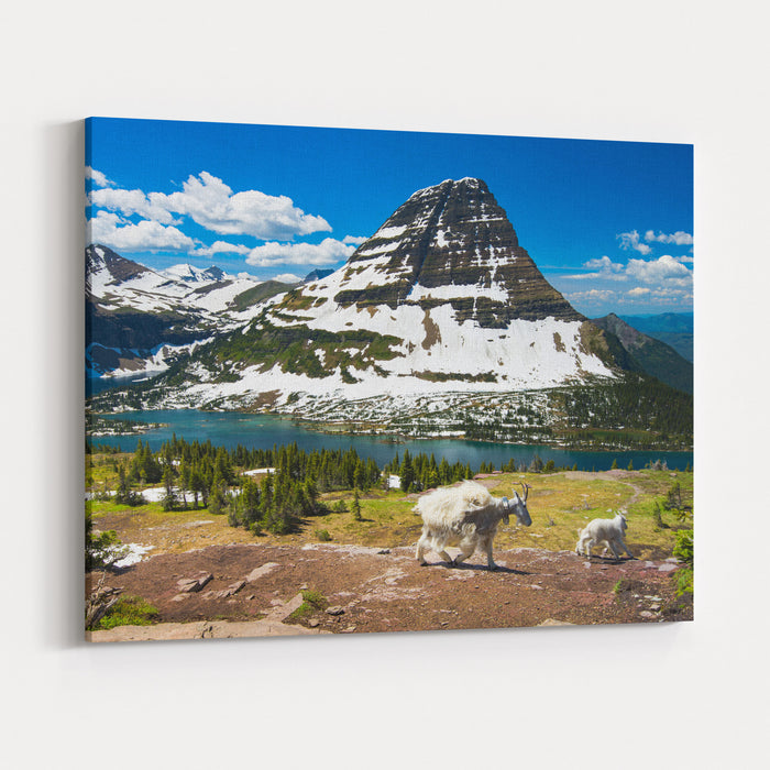 Mountain Goats And Hidden Lake, Glacier National Park Canvas Wall Art Print