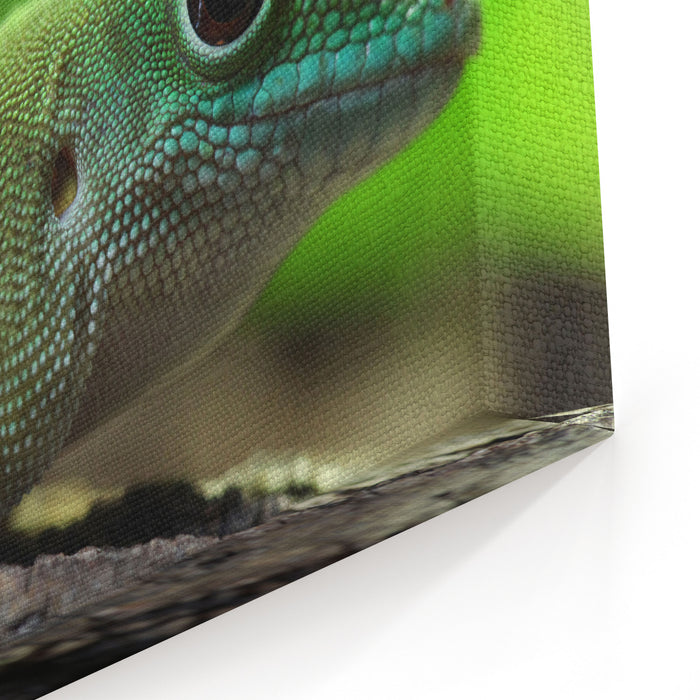 Kochs Giant Day Gecko Phelsuma Madagascariensis Kochi, Also Known As The Madagascar Day Gecko Wildlife Animal Canvas Wall Art Print