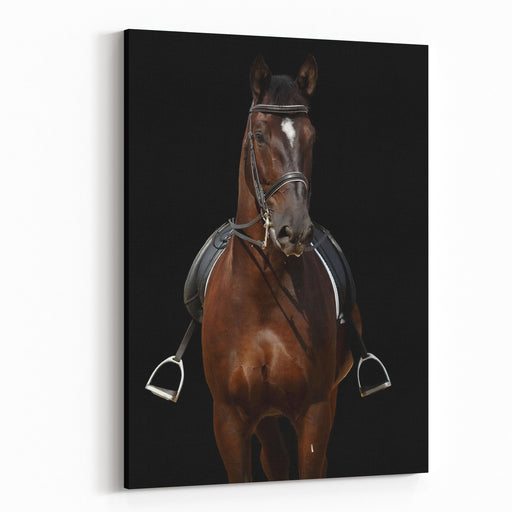Horse Isolated On Black Canvas Wall Art Print