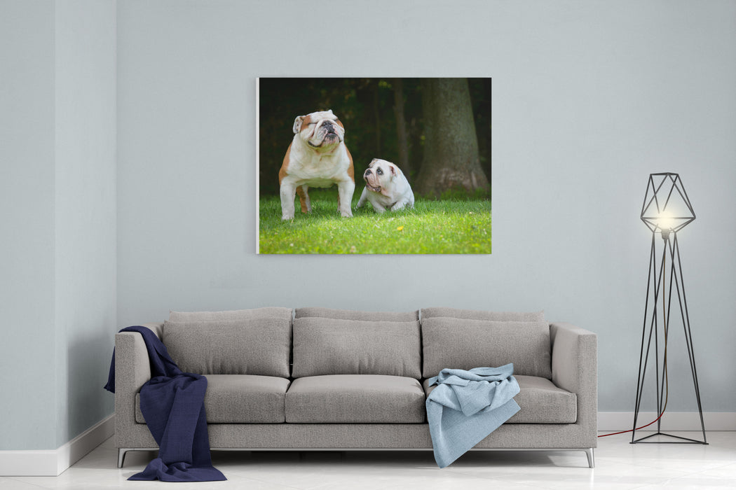 Puppy And Adult Dog Playing Outside  Bulldog Puppy  Months And Adult  Years Canvas Wall Art Print