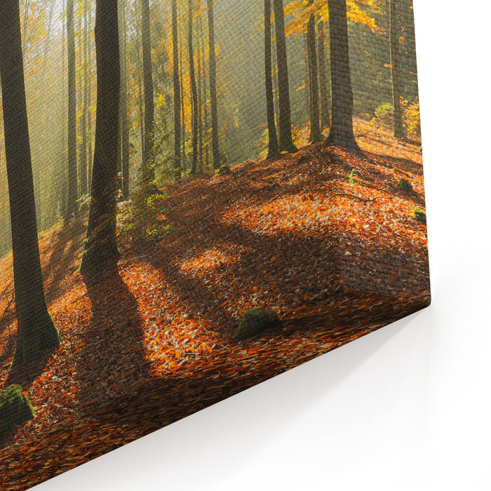 Autumn Forest In North PolandPomerania ProvinceRays Of Light Canvas Wall Art Print