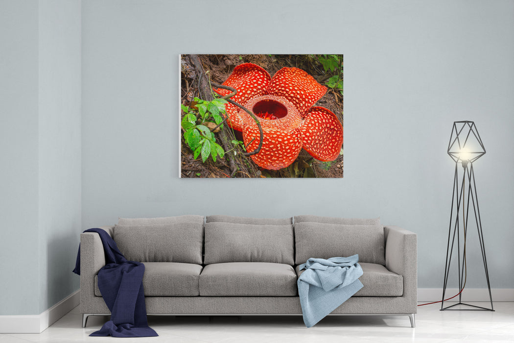Rafflesia, The Biggest Flower In The World, Sumatra, Indonesia Canvas Wall  Art Print