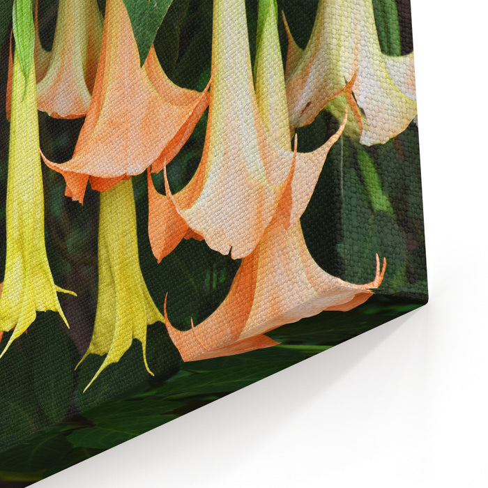 Beautiful Flowers In Thailand Canvas Wall Art Print