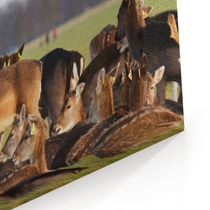 A Herd Of Deer In The Phoenix Park In Dublin, Ireland, One Of The Largest Walled City Parks In Europe Of A Size Of  Acres Canvas Wall Art Print