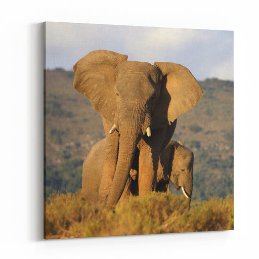 Two Elephants In Golden Light Taken On Safari In South Africa Canvas Wall Art Print