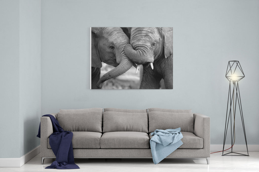This Amazing Black And White Photo Of Two Elephants Interacting Was Taken On Safari In Africa Canvas Wall Art Print