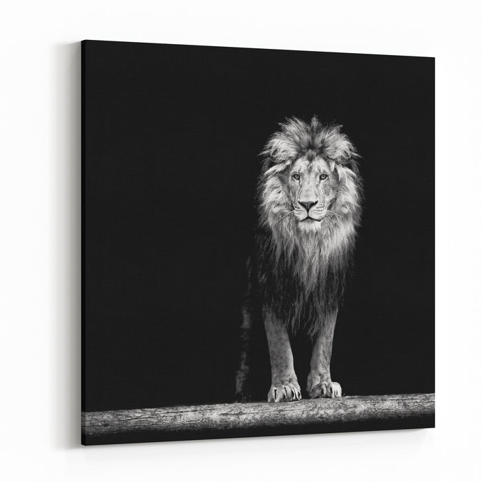 Portrait Of A Beautiful Lion, In The Dark Canvas Wall Art Print