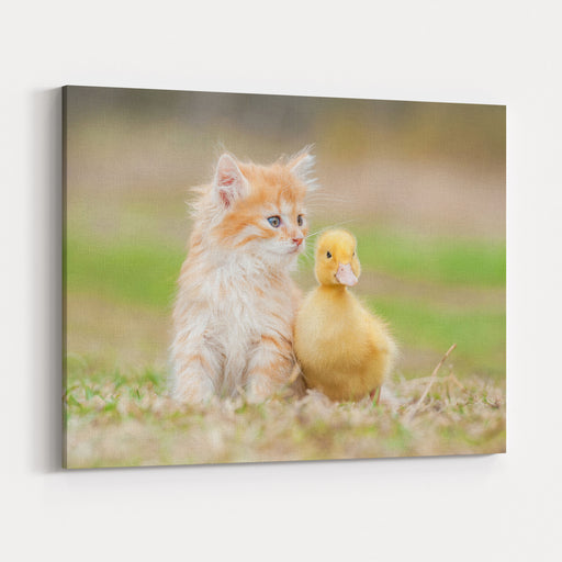 Adorable Red Kitten With Little Duckling Canvas Wall Art Print