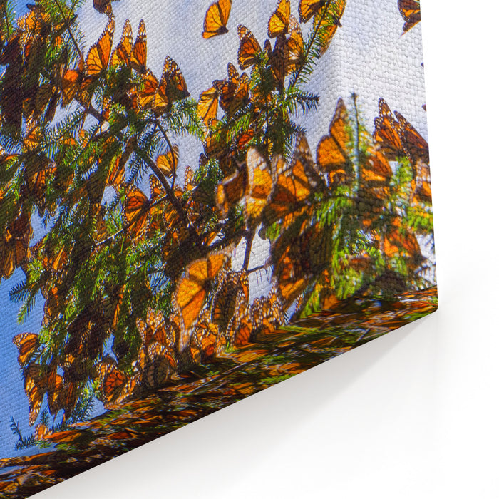 Monarch Butterflies On Tree Branch In Blue Sky Background In Michoacan, Mexico Canvas Wall Art Print