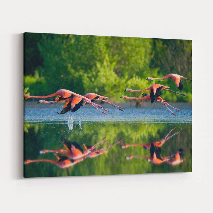 Caribbean Flamingos Flying Over Water With Reflection Cuba An Excellent Illustration Canvas Wall Art Print