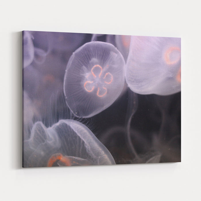 White And Orange Jellyfish Swimming Underwater In A Group Canvas Wall Art Print