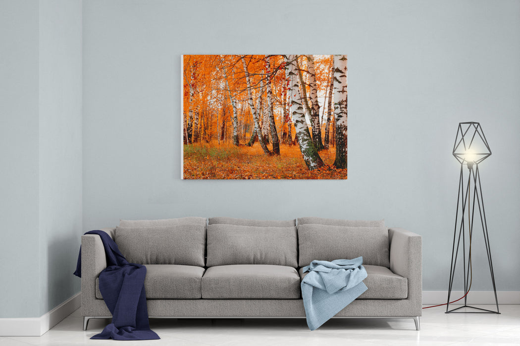 Orange Birch Grove Canvas Wall Art Print