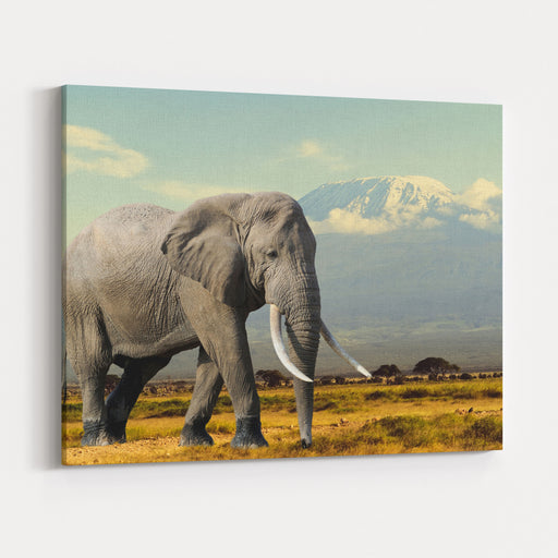 Elephant On Kilimajaro Mount Background In National Park Of Kenya, Africa Canvas Wall Art Print