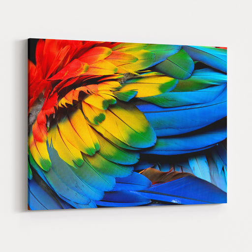 Colorful Of Scarlet Macaw Birds Feathers With Red Yellow Orange And Blue Shades, Exotic Nature Background And Texture Canvas Wall Art Print