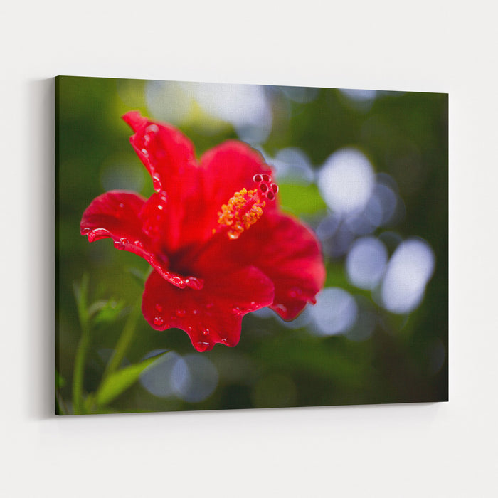 The Hibiscus Flower Close Up Canvas Wall Art Print — Rosenberry Rooms