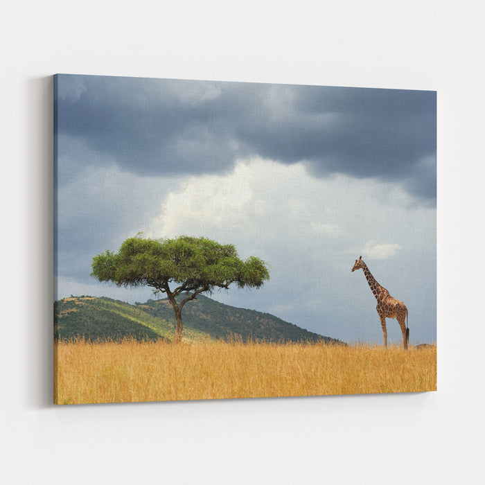 Beautiful Landscape With Nobody Tree And Gireffe  In Africa Canvas Wall Art Print