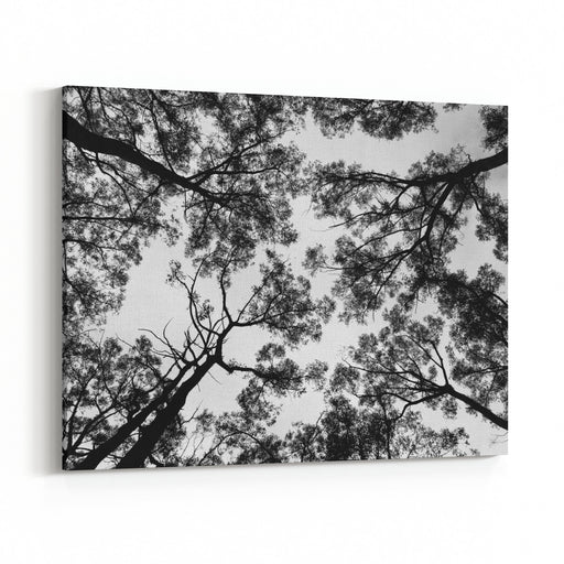 Tree Branches Against Sky Black And White Background Canvas Wall Art Print