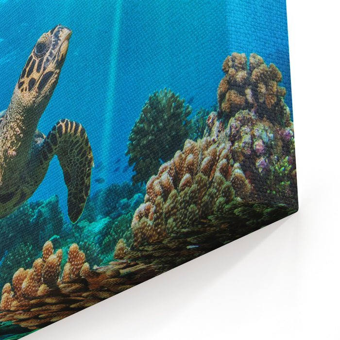 Beautiful Underwater Postcard Maldivian Sea Turtle Floating Up And Over Coral Reef Loggerhead In Wild Nature Habitat Canvas Wall Art Print