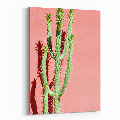 Photo Picture Of A Tropical Cactus Texture Background Canvas Wall Art Print