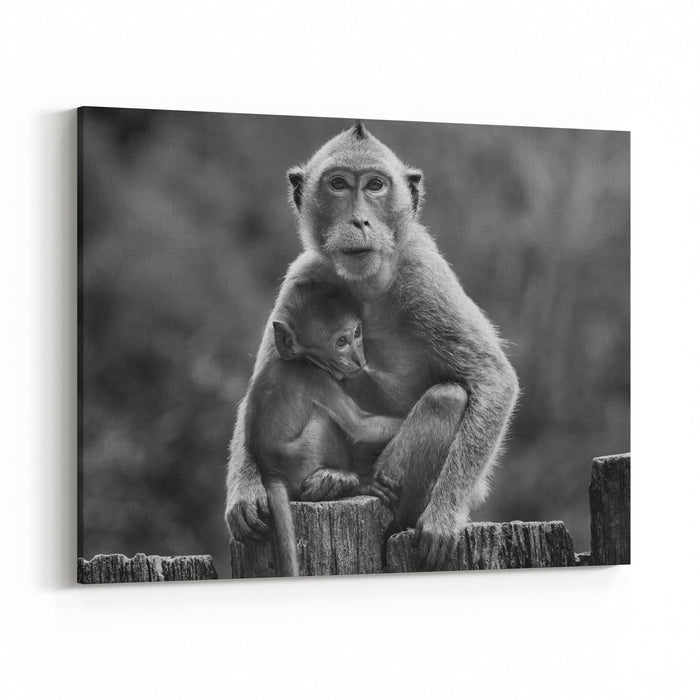Black And White Photography Of Wild Monkey And Kid Canvas Wall Art Print