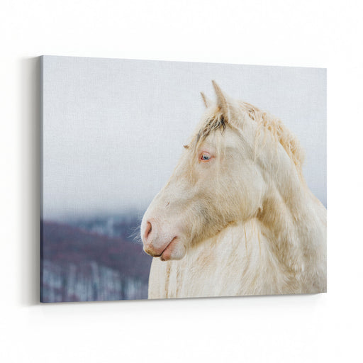 Albino Horse With Eyes Blue On The Snow Canvas Wall Art Print