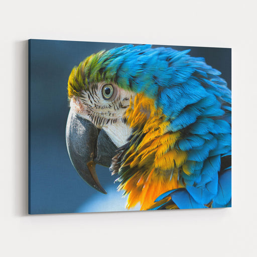 Blueandyellow Macaw Lat Ara Ararauna Closeup Canvas Wall Art Print