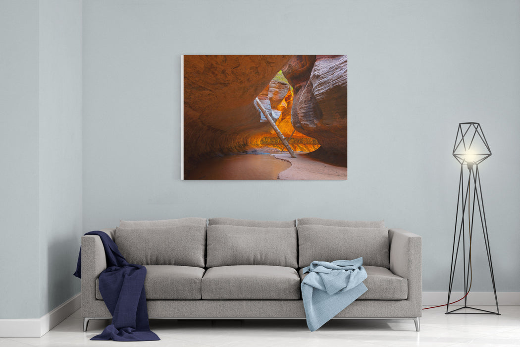 Tree In The Subway  Left Fork In Zion National Park Canvas Wall Art Print