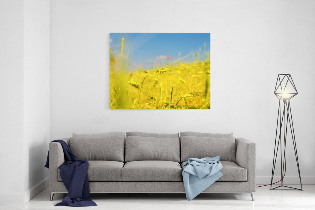 Scenic Landscape With Ears Of Barley Against The Sky In Gold Tones Harvest, Abundance, Prosperity, Wealth  Concept Canvas Wall Art Print